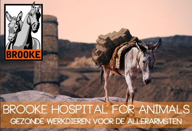 Brooke Hospital for Animals
